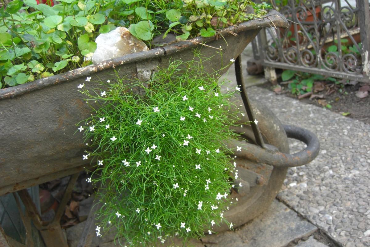 piante da ombra nel giardino di rosita
